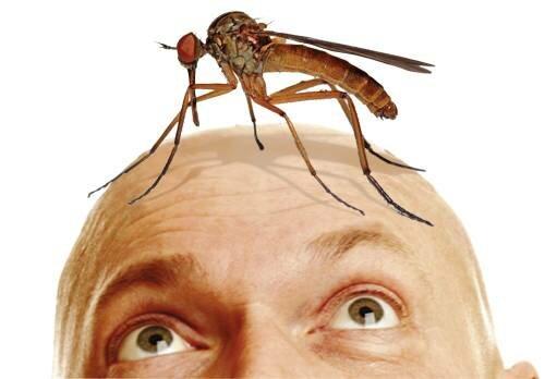 Кого кусает комар