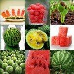 Какая калорийность и состав арбуза?