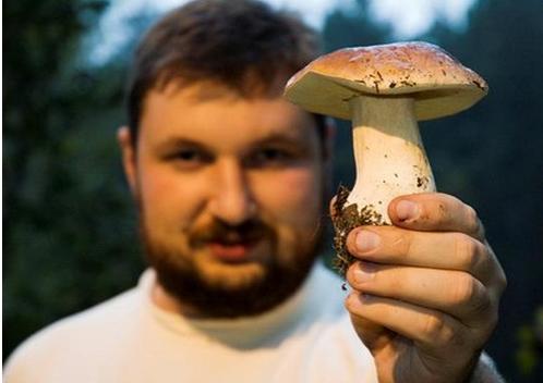 Как собирать грибы?