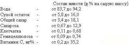 Химический состав дыни