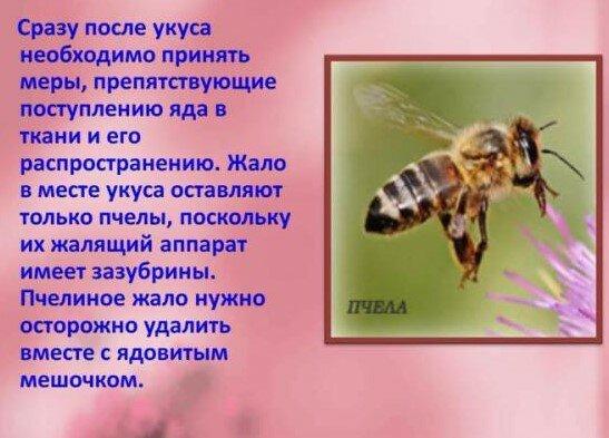 Что делать, если укусила оса или пчела?