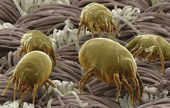 Средства от пылевых клещей