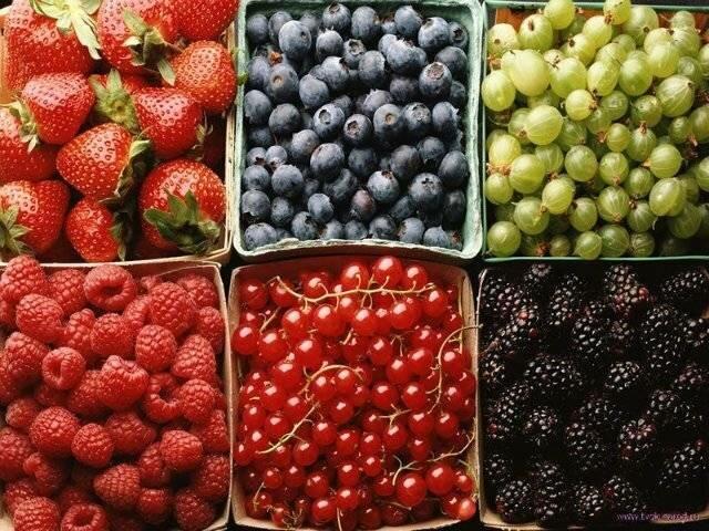 Как посушить в домашних условиях грибы и ягоды?