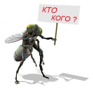 Как избавиться от мух быстро и эффективно?