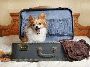 Как путешествовать с собакой? (рекомендации)