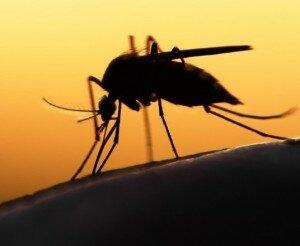 Откуда берутся комары?